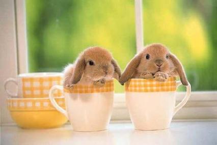 bunnies_cups